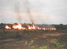 Human-ignited fire in the Amazon.